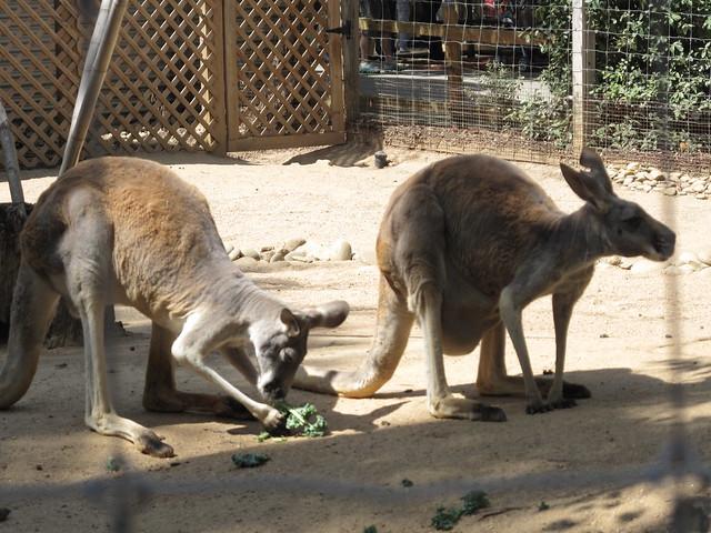 Zoo 0039