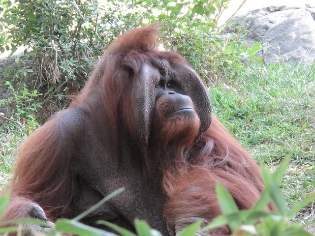 Zoo 0343