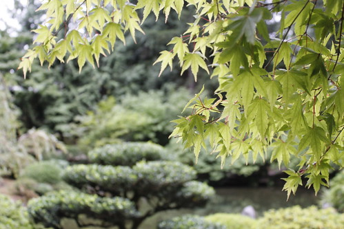 20110915. japanese gardens, portland.