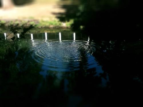 splash by Nature Morte