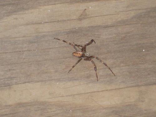 2011 09 22 spider 003