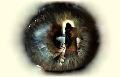 Nacer a mi muerte negra y embustera!!... (conejo721*) Tags: argentina ojo muerte texturas palabras mardelplata pupila poesa poema sentimientos conejo721