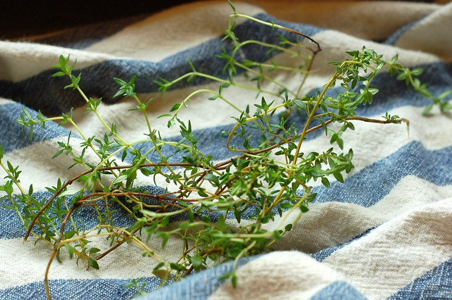 Thyme by Eve Fox, Garden of Eating blog, copyright 2011