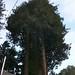 Arboreal Remodel