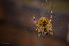 "Spider <a style=""margin-left:10px; font-size:0.8em;"" href=""http://www.flickr.com/photos/50017678@N06/6181751150/"" target=""_blank"">@flickr</a>"