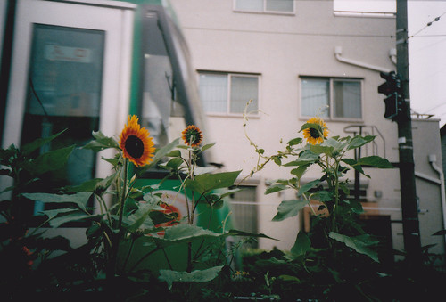 向日葵と世田谷線