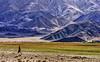 Hanle Village. (Prabhu B Doss) Tags: india community nikon women village farm observatory monastery tibetan farmer kashmir leh himalayas ladakh jammu travelphotography ladakhi jammuandkashmir 2011 bikeexpedition incredibleindia d80 transhimalaya hanle prabhub prabhubdoss zerommphotography 0mmphotography