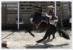 Entrada de Patas (Francisco Grate) Tags: chile caballo rodeo huaso hualpen