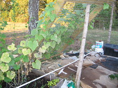 garden, sept 2011 010