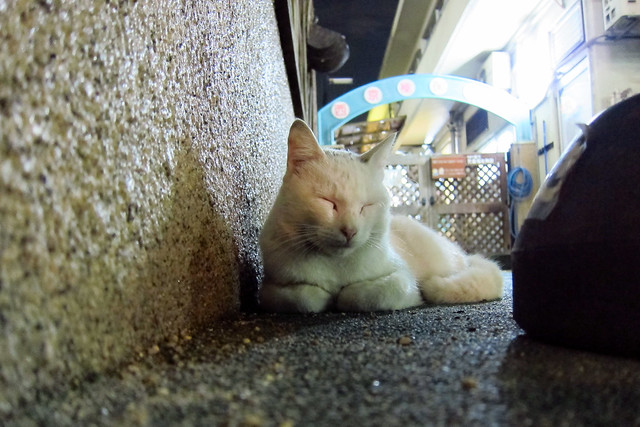 Today's Cat@2011-09-28