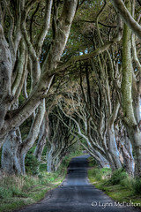 The Dark Hedges (Lynn McFulton) Tags: road trees ireland spirit haunted mystical lordoftherings magical beechtrees thedarkhedges