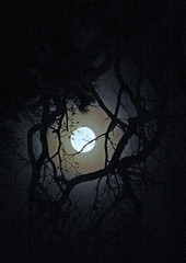A Full Moon at Adelphia Plantation:  Wiggins Crossroads, Edgecombe County, NC (FEATURED IN FLICKR EXPLORE 9-30-2011) (EdgecombePlanter) Tags: moon abandoned halloween cemetery graveyard dark death scary decay ghost gothic eerie creepy fullmoon spooky southern moonlight harvestmoon lunar