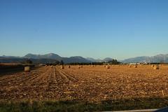 San Daniele del Friuli...... (Danilo.......e Paco) Tags: italia friuli sandanieledelfriuli prosciuttocrudo