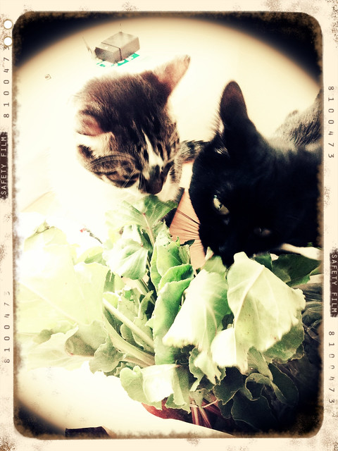 cats apparently love beet greens