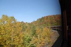 DSD_7711 (Greying_Geezer) Tags: autumn ontario canada fall colors colours scenic trains autumncolours railways railroads saultstemarie on algoma agawacanyon traintour