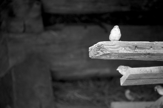 Bird on a board