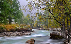 Courmayeur smoky river (Francesco Magoga Photography) Tags: longexposure autumn white snow tree river landscapes leaf october stream europe flickr italia priceless awesome fiume dream september evergreen fantasy neve stunning lightning 1855mm 1855 nikkor dreamlike polarized hush nebbia courmayeur ruscello inverno chamonix autunno azzurro alpi francia hoya mosso steinbock filtro meraviglia chamonixmontblanc polarizzatore magoga flickrtop parcdemerlet nikkor1855mmf3556gvr nikond3100 francescomagoga