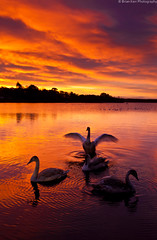Swan Lake (.Brian Kerr Photography.) Tags: light colour castle sunrise reflections scotland swans loch dumfriesandgalloway lochmaben