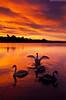 Swan Lake (.Brian Kerr Photography.) Tags: light colour castle sunrise reflections scotland swans loch dumfriesandgalloway lochmaben