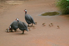 Big Family (Muchan5) Tags: bird birds animals canon zoo sydney australia canoneoskissdigitaln tarongazoo mygearandme mygearandmepremium mygearandmebronze mygearandmesilver mygearandmegold mygearandmeplatinum mygearandmediamond