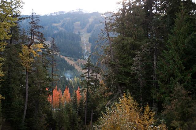 Whistler autumn