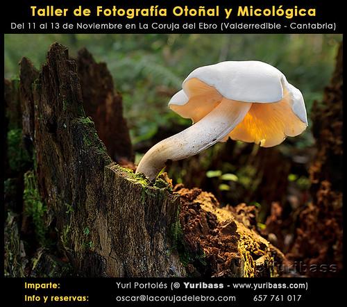 Taller de Fotografía Otoñal y Micológica