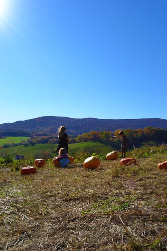 big pumpkins by ellajohn