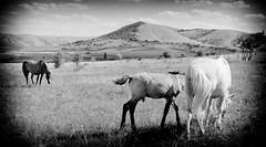Horses (undrsky) Tags: horses mountains landscape crimea пейзаж горы крым лошади
