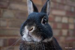 Goodbye, (Naomi | Warren) Tags: rabbit bunny love naomi warren hop bun hoppity