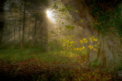Morning Light (Chris McLoughlin) Tags: morning sunlight nature landscape sony sunburst hdr 1755mm a580 chrismcloughlin sonya580