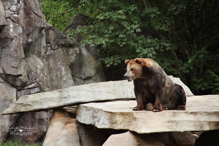 NC Zoo #53