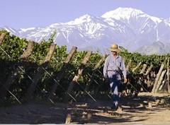 Apoyo financiero al sector vitivinícola para mejorar la competitividad