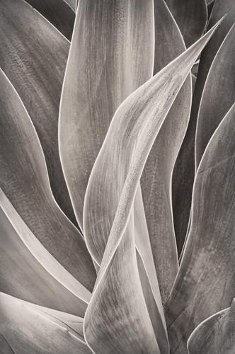 Succulent by Harold Davis