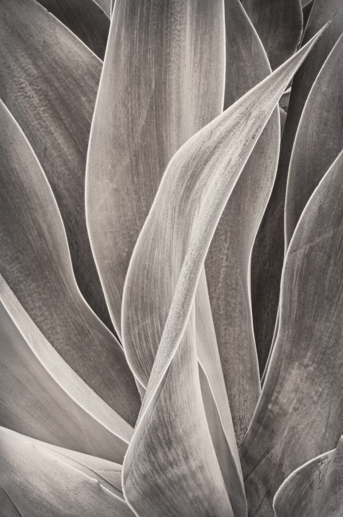 Succulent © Harold Davis