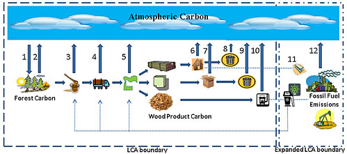 OSU Study: Woody Biomass Not a Good Substitute For Fossil Fuels ...