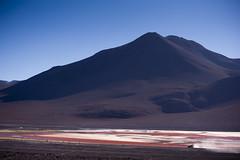 Laguna Colorada - Red Lagoon - Bolivia (tigrić) Tags: travel bird southamerica landscape jeep bolivia saltlake andes altiplano borax lagunacolorada jamesflamingo redlagoon southwesttour eduardoavaroaandeanfaunanationalreserve