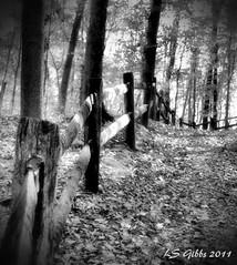 uphill fence b/w (LaLa83) Tags: park autumn trees ohio blackandwhite bw leaves fence october sony alpha metropark a230 2011 slaterun pickawaycounty slaterunmetropark