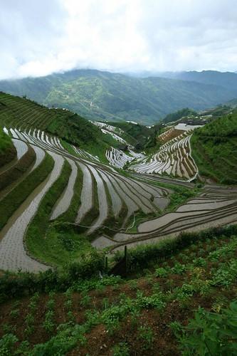 Thumbnail from Longsheng Longji Rice Terraces