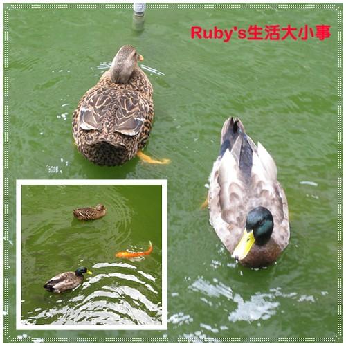 2011山陽國小 (4)