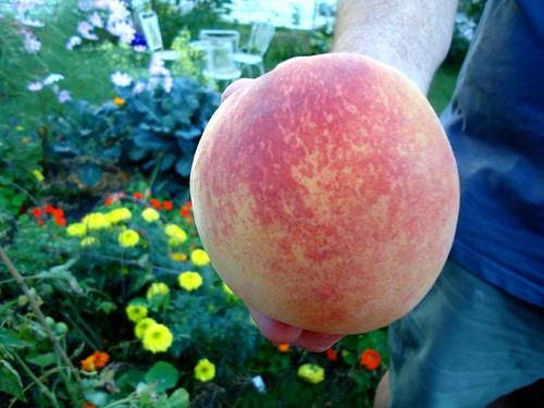the half pound peach