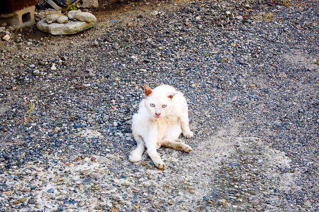 Today's Cat@2011-09-11