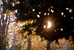 Elmarit 135/2.8 : Sunset halo (Robert T Wilson) Tags: leica sunset sunlight prime bokeh halo flare m8 28 manual 135 f28 foreground 135mm elmarit leitz m8u