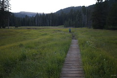 Sunset Walk B (Hart Walter) Tags: marmot muledeer canadageese hotsprings sandhillcrane mtlassen riverotter lassenvolcanicnationalpark mountainflowers bumpasshell mountainmeadows yellowbelliedmarmot sootygrouse coniferousforests northerncaliforniamountains drakesbadlodge