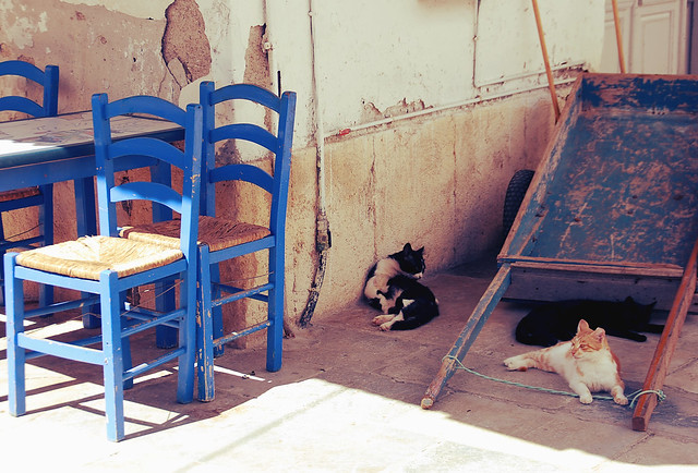 cats on hydra