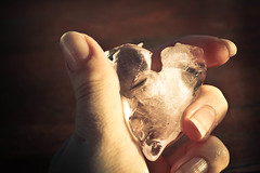 your heart is melting in my hand (*Miss  *) Tags: cold love ice canon photography rebel cool hand heart emotion amor coeur fresh h amour xs conceptual herz  amore liebe corazon icecube liefde  mio krlek dragoste heartshapedicecube