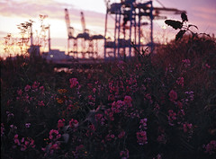(laurentgaudart) Tags: flowers summer 120 film port fleurs 645 harbour argentique lehavre estival mamiya645protl fujiprovia400x industriallandscapes paysageindustriel