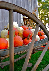 pumpkin display (Kadeefoto) Tags: fall shelburnefarm farm massachusetts pumpkins applepicking stowema