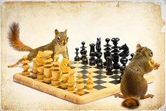 "I said, ""Take your turn"" not Take your pawn""... (Nancy Rose) Tags: playing game animals squirrel chess 12 boardgame textured 8847edit"