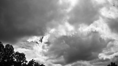 You'll never know dear... (Spirits of Autumn) Tags: trees sky blackandwhite monochrome clouds digital foreboding dramatic stormy pumpkinpatch benson smithsnursery