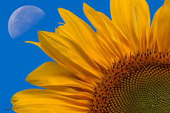 The Sun And The Moon (gardenworx3123) Tags: doublyniceshot doubleniceshot mygearandme mygearandmepremium mygearandmebronze mygearandmesilver gearandmebronze artistoftheyearlevel2